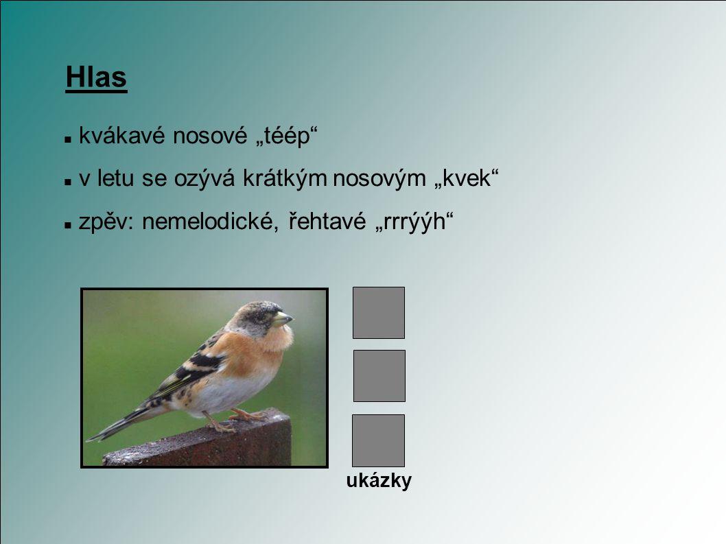Chov není to klasický klecní pták v kleci neposedný; vyžaduje velké, otrevřené voliéry nutný zřetel na to, že mláďata jsou krmeny hmyzem existuje řada