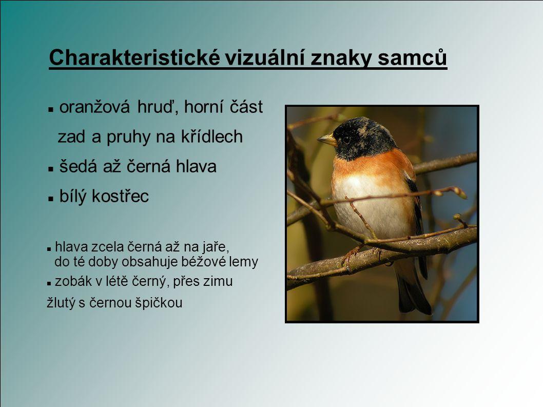 Řád: Pěvci (Passeriformes) Čeleď: Pěnkavovití (Fringillidae) Rod: Pěnkava (Fringilla) Druh: Pěnkava jikavec (Fringilla montifringilla) Taxonomie Popis