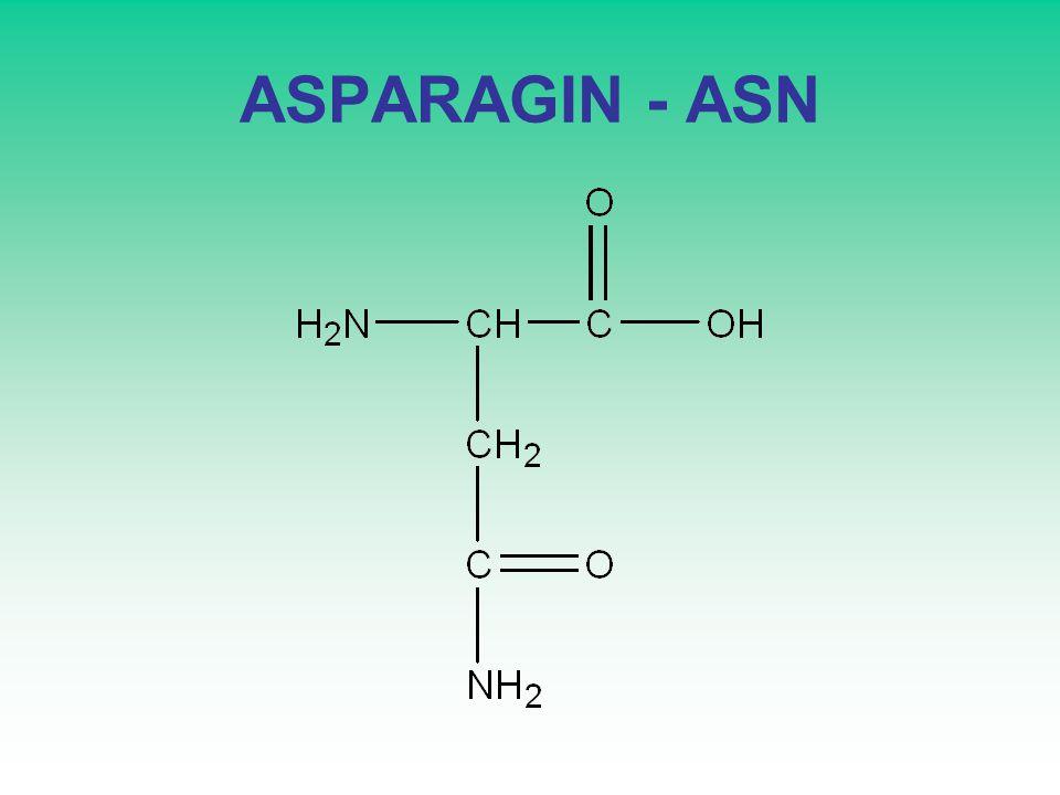 ASPARAGIN - ASN