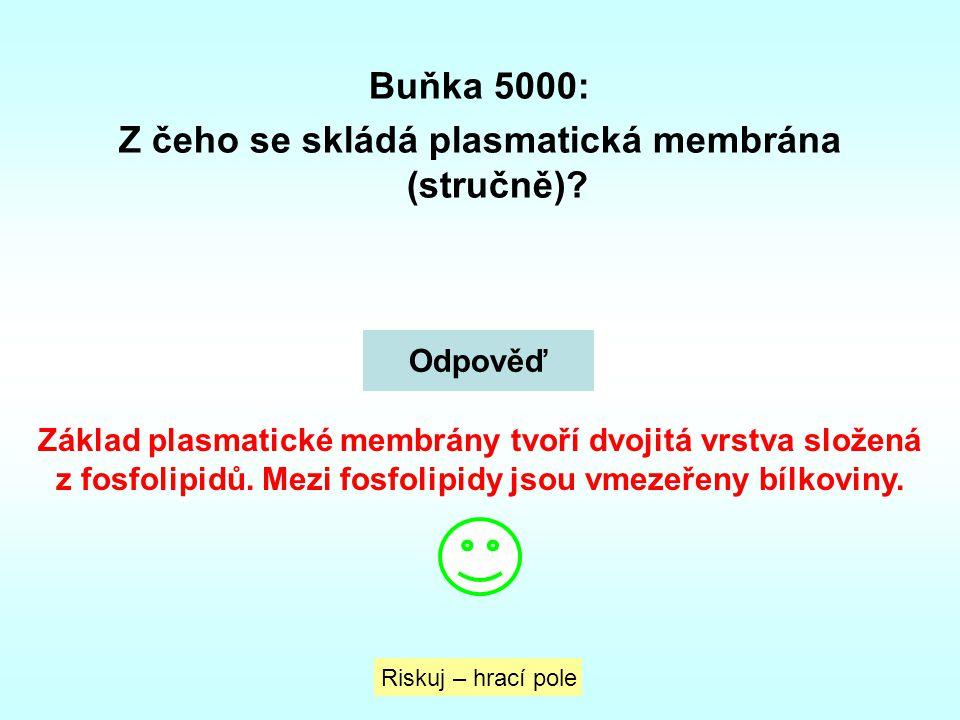 Buňka 5000: Z čeho se skládá plasmatická membrána (stručně)? Riskuj – hrací pole Odpověď Základ plasmatické membrány tvoří dvojitá vrstva složená z fo