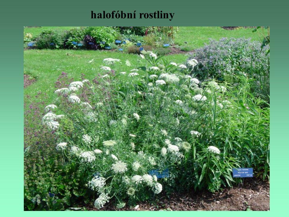 halofóbní rostliny