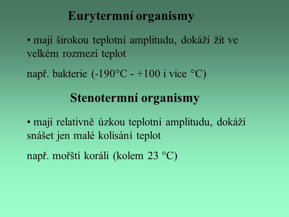 Psychrofyt Betula nana