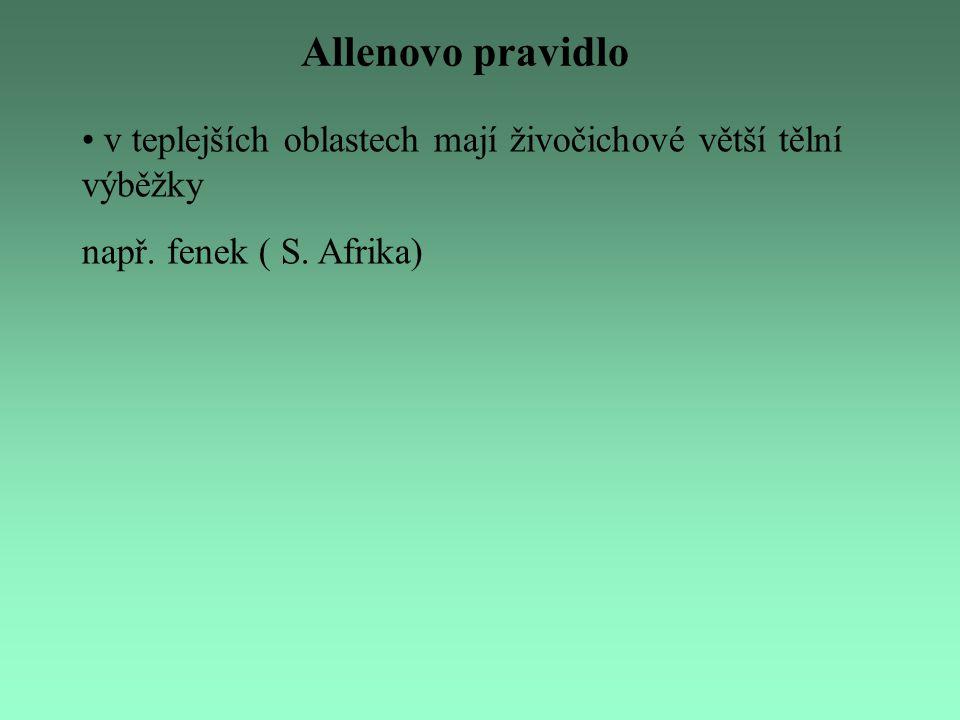 Allenovo pravidlo v teplejších oblastech mají živočichové větší tělní výběžky např. fenek ( S. Afrika)