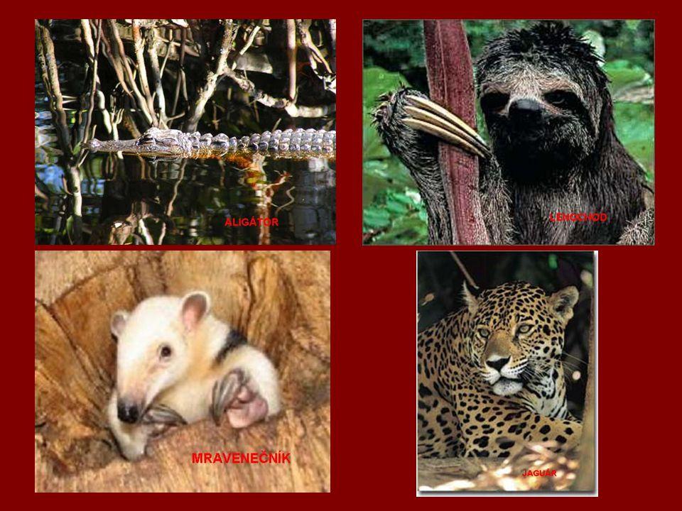 Fauna – Lama, tapír, lenochod, akuči, jaguár, anakonda, piraňa, mravenečník, kapybara, lachtan, papoušek ara, tučňáci, krokodýli, aligátory Flora – čajovník, Durman obecný, kakaovník, muškátovník, Petúnie, tabák, káva