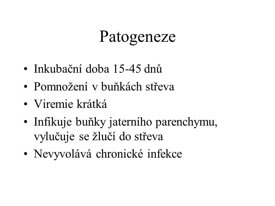 Patogeneze Inkubační doba 15-45 dnů Pomnožení v buňkách střeva Viremie krátká Infikuje buňky jaterního parenchymu, vylučuje se žlučí do střeva Nevyvol