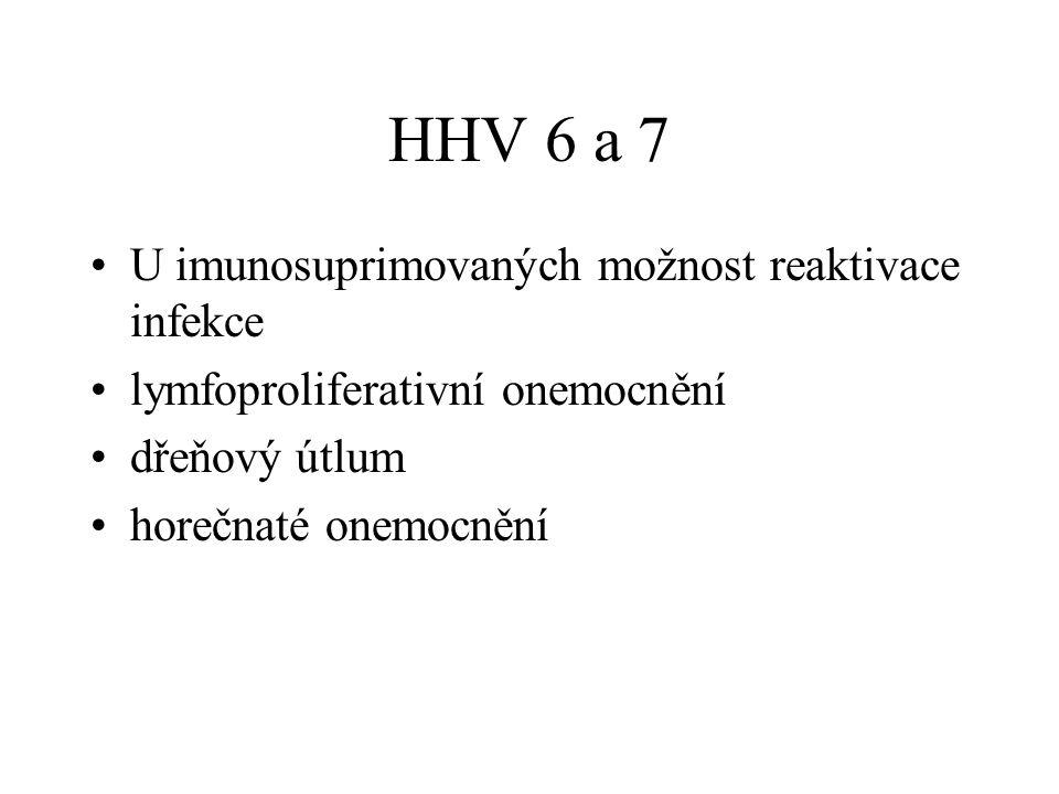HHV 6 a 7 U imunosuprimovaných možnost reaktivace infekce lymfoproliferativní onemocnění dřeňový útlum horečnaté onemocnění