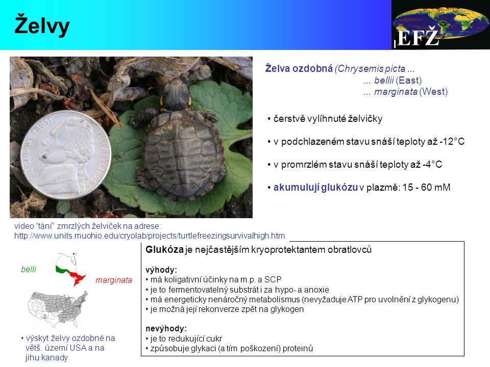 Želva ozdobná (Chrysemis picta......bellii (East)...