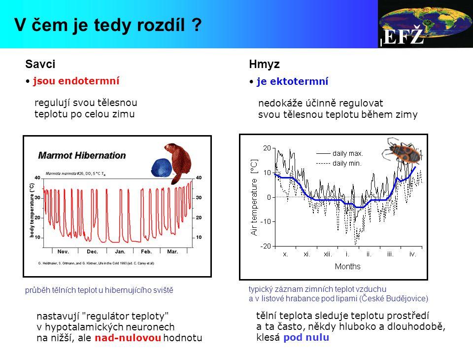 EFŽ jsou endotermní regulují svou tělesnou teplotu po celou zimu je ektotermní nedokáže účinně regulovat svou tělesnou teplotu během zimy nastavují regulátor teploty v hypotalamických neuronech na nižší, ale nad-nulovou hodnotu tělní teplota sleduje teplotu prostředí a ta často, někdy hluboko a dlouhodobě, klesá pod nulu SavciHmyz průběh tělních teplot u hibernujícího sviště typický záznam zimních teplot vzduchu a v listové hrabance pod lipami (České Budějovice) V čem je tedy rozdíl ?