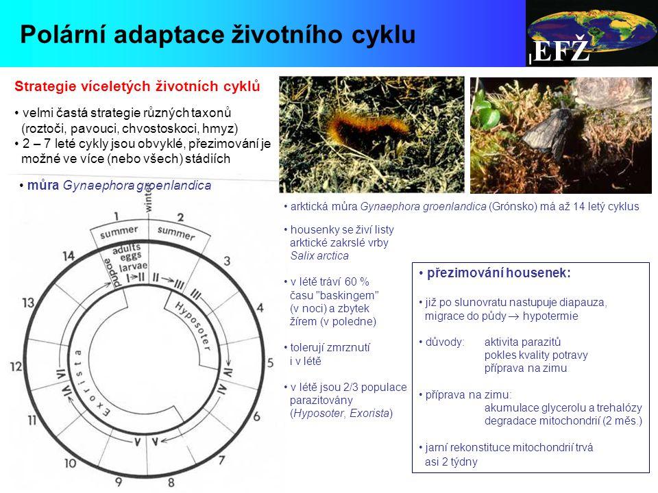 EFŽ Polární adaptace životního cyklu Strategie víceletých životních cyklů velmi častá strategie různých taxonů (roztoči, pavouci, chvostoskoci, hmyz) 2 – 7 leté cykly jsou obvyklé, přezimování je možné ve více (nebo všech) stádiích můra Gynaephora groenlandica arktická můra Gynaephora groenlandica (Grónsko) má až 14 letý cyklus housenky se živí listy arktické zakrslé vrby Salix arctica v létě tráví 60 % času baskingem (v noci) a zbytek žírem (v poledne) tolerují zmrznutí i v létě v létě jsou 2/3 populace parazitovány (Hyposoter, Exorista) přezimování housenek: již po slunovratu nastupuje diapauza, migrace do půdy  hypotermie důvody: aktivita parazitů pokles kvality potravy příprava na zimu příprava na zimu: akumulace glycerolu a trehalózy degradace mitochondrií (2 měs.) jarní rekonstituce mitochondrií trvá asi 2 týdny