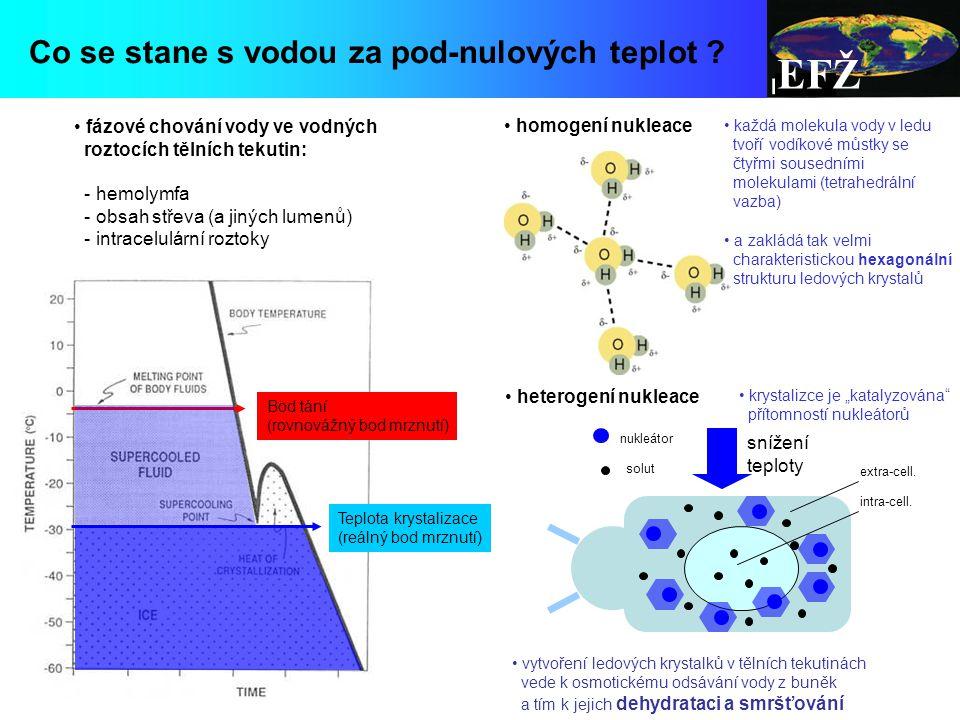 """EFŽ každá molekula vody v ledu tvoří vodíkové můstky se čtyřmi sousedními molekulami (tetrahedrální vazba) a zakládá tak velmi charakteristickou hexagonální strukturu ledových krystalů Bod tání (rovnovážný bod mrznutí) fázové chování vody ve vodných roztocích tělních tekutin: - hemolymfa - obsah střeva (a jiných lumenů) - intracelulární roztoky Teplota krystalizace (reálný bod mrznutí) homogení nukleace heterogení nukleace krystalizce je """"katalyzována přítomností nukleátorů snížení teploty vytvoření ledových krystalků v tělních tekutinách vede k osmotickému odsávání vody z buněk a tím k jejich dehydrataci a smršťování extra-cell."""