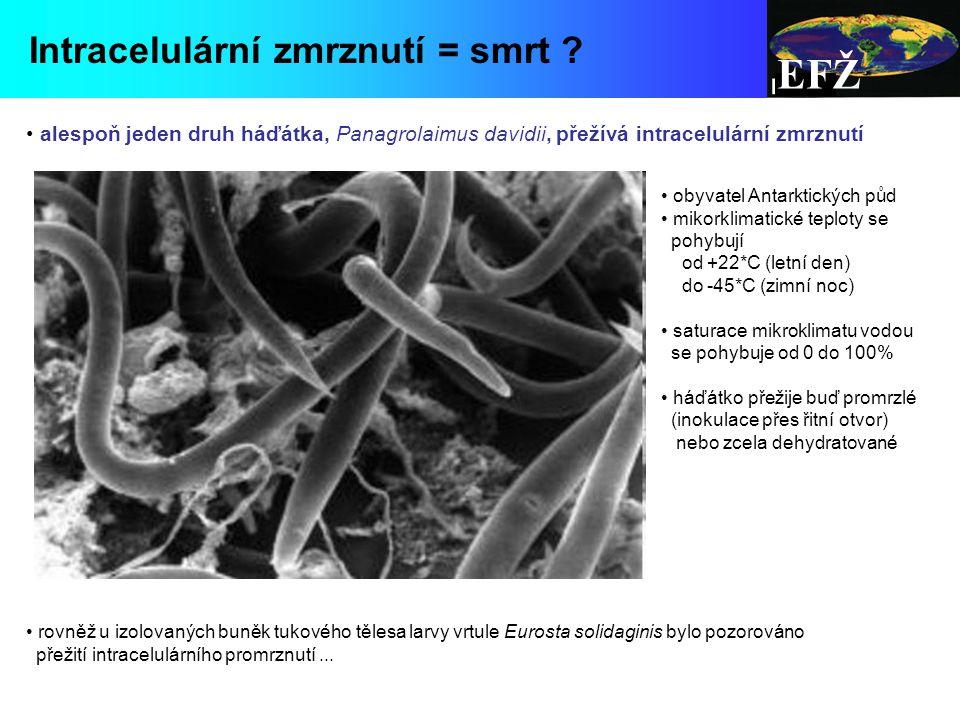 EFŽ Intracelulární zmrznutí = smrt .