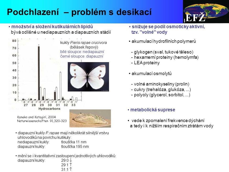 EFŽ Podchlazení – problém s desikací množství a složení kutikulárních lipidů bývá odlišné u nediapauzních a diapauzních stádií kukly Pieris rapae crucivora (bělásek řepový) bílé sloupce: nediapauzní černé sloupce: diapauzní diapauzní kukly P.