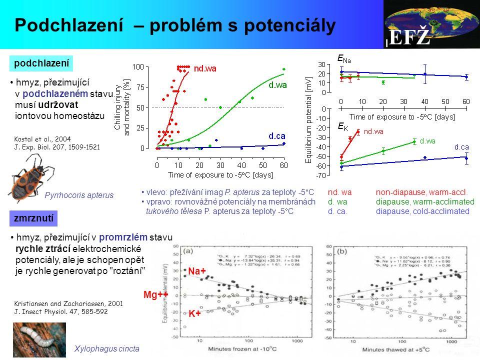 EFŽ Podchlazení – problém s potenciály hmyz, přezimující v podchlazeném stavu musí udržovat iontovou homeostázu Kostal et al., 2004 J.