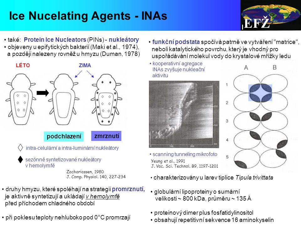 EFŽ Ice Nucelating Agents - INAs LÉTO ZIMA intra-celulární a intra-luminární nukleátory sezónně syntetizované nukleátory v hemolymfě také: Protein Ice Nucleators (PINs) - nukleátory objeveny u epifytických bakterií (Maki et al., 1974), a později nalezeny rovněž u hmyzu (Duman, 1978) kooperativní agregace INAs zvyšuje nukleační aktivitu scanning tunneling mikrofoto druhy hmyzu, které spoléhají na strategii promrznutí, je aktivně syntetizují a ukládají v hemolymfě před příchodem chladného období při poklesu teploty nehluboko pod 0°C promrzají Yeung et al., 1991 J.