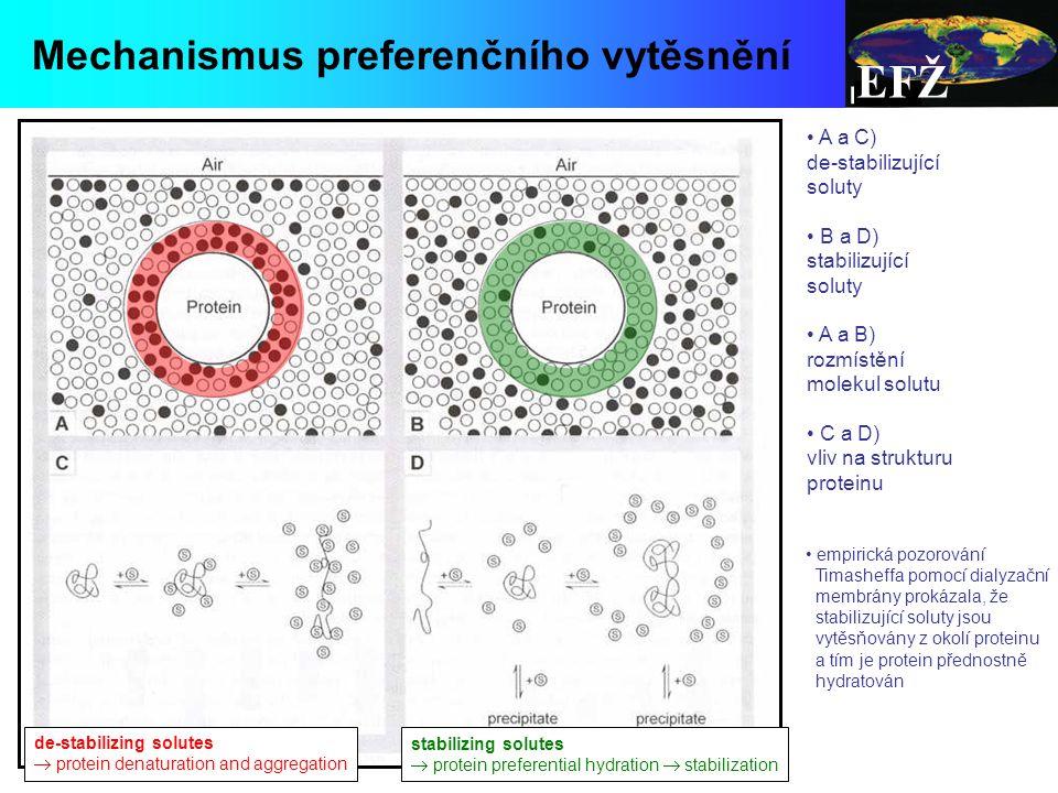 EFŽ de-stabilizing solutes  protein denaturation and aggregation stabilizing solutes  protein preferential hydration  stabilization Mechanismus preferenčního vytěsnění A a C) de-stabilizující soluty B a D) stabilizující soluty A a B) rozmístění molekul solutu C a D) vliv na strukturu proteinu empirická pozorování Timasheffa pomocí dialyzační membrány prokázala, že stabilizující soluty jsou vytěsňovány z okolí proteinu a tím je protein přednostně hydratován