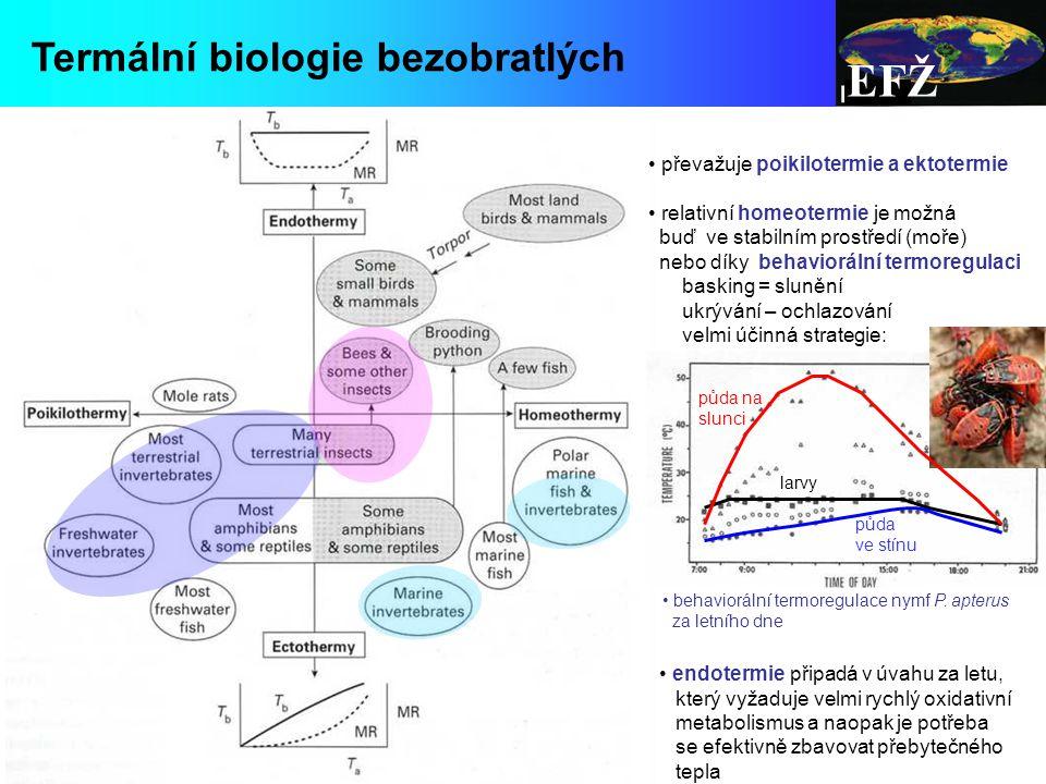 EFŽ Termální biologie bezobratlých převažuje poikilotermie a ektotermie relativní homeotermie je možná buď ve stabilním prostředí (moře) nebo díky behaviorální termoregulaci basking = slunění ukrývání – ochlazování velmi účinná strategie: endotermie připadá v úvahu za letu, který vyžaduje velmi rychlý oxidativní metabolismus a naopak je potřeba se efektivně zbavovat přebytečného tepla behaviorální termoregulace nymf P.