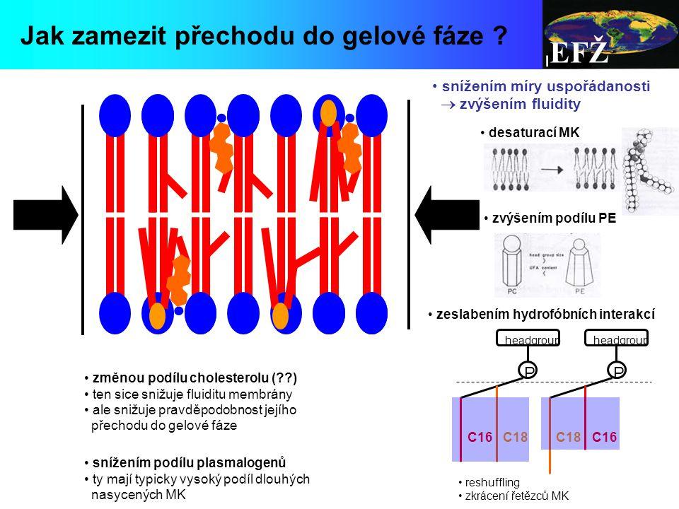 EFŽ snížením míry uspořádanosti  zvýšením fluidity desaturací MK zvýšením podílu PE zeslabením hydrofóbních interakcí změnou podílu cholesterolu (??) ten sice snižuje fluiditu membrány ale snižuje pravděpodobnost jejího přechodu do gelové fáze Jak zamezit přechodu do gelové fáze .