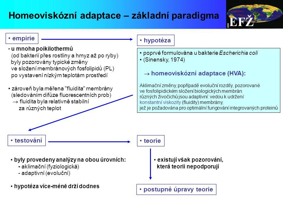EFŽ Homeoviskózní adaptace – základní paradigma poprvé formulována u bakterie Escherichia coli (Sinensky, 1974)  homeoviskózní adaptace (HVA): Aklimační změny, popřípadě evoluční rozdíly, pozorované ve fosfolipidickém složení biologických membrán různých živočichů jsou adaptivní: vedou k udržení konstantní viskozity (fluidity) membrány, jež je požadována pro optimální fungování integrovaných proteinů u mnoha poikilothermů (od bakterií přes rostliny a hmyz až po ryby) byly pozorovány typické změny ve složení membránových fosfolipidů (PL) po vystavení nízkým teplotám prostředí zároveň byla měřena fluidita membrány (sledováním difůze fluorescentních prob)  fluidita byla relativně stabilní za různých teplot empirie hypotéza testování byly provedeny analýzy na obou úrovních: - aklimační (fyziologická) - adaptivní (evoluční) hypotéza více-méně drží dodnes teorie existují však pozorování, která teorii nepodporují postupné úpravy teorie
