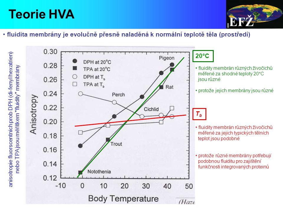 EFŽ anisotropie fluorscentních prob DPH (di-fenyl hexatrien) nebo TPA jsou měřítkem fluidity membrány TbTb 20°C fluidita membrány je evolučně přesně naladěná k normální teplotě těla (prostředí) Teorie HVA fluidity membrán různých živočichů měřené za shodné teploty 20  C jsou různé protože jejich membrány jsou různé fluidity membrán různých živočichů měřené za jejich typických tělních teplot jsou podobné protože různé membrány potřebují podobnou fluiditu pro zajištění funkčnosti integrovaných proteinů