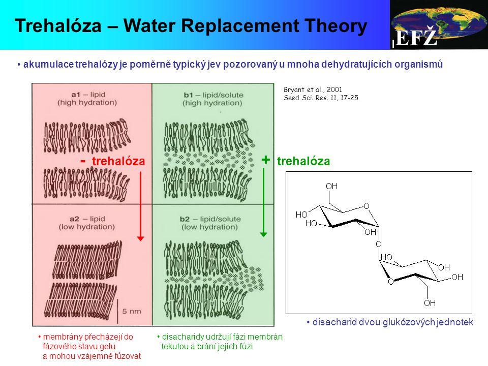 EFŽ membrány přecházejí do fázového stavu gelu a mohou vzájemně fůzovat disacharidy udržují fázi membrán tekutou a brání jejich fůzi - trehalóza Bryant et al., 2001 Seed Sci.