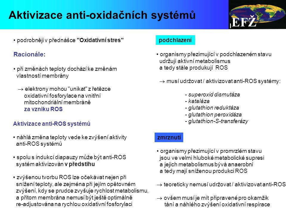 EFŽ podrobněji v přednášce Oxidativní stres Racionále: při změnách teploty dochází ke změnám vlastností membrány  elektrony mohou unikat z řetězce oxidativní fosforylace na vnitřní mitochondriální membráně za vzniku ROS Aktivizace anti-ROS systémů náhlá změna teploty vede ke zvýšení aktivity anti-ROS systémů spolu s indukcí diapauzy může být anti-ROS systém aktivizován v předstihu zvýšenou tvorbu ROS lze očekávat nejen při snížení teploty, ale zejména při jejím opětovném zvýšení, kdy se prudce zvyšuje rychlost metabolismu, a přitom membrána nemusí být ještě optimálně re-adjustována na rychlou oxidativní fosforylaci organismy přezimující v podchlazeném stavu udržují aktivní metabolismus a tedy stále produkují ROS  musí udržovat / aktivizovat anti-ROS systémy: - superoxid dismutáza - kataláza - glutathion reduktáza - glutathion peroxidáza - glutathion-S-transferázy Aktivizace anti-oxidačních systémů podchlazení zmrznutí organismy přezimující v promrzlém stavu jsou ve velmi hluboké metabolické supresi a jejich metabolismus bývá anaerobní a tedy mají sníženou produkci ROS  teoreticky nemusí udržovat / aktivizovat anti-ROS  ovšem musí je mít připravené pro okamžik tání a náhlého zvýšení oxidativní respirace