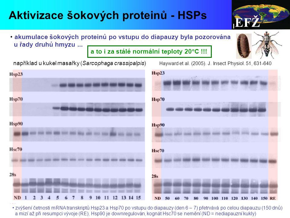 EFŽ Aktivizace šokových proteinů - HSPs diapauses at pupal stage Hayward et al.