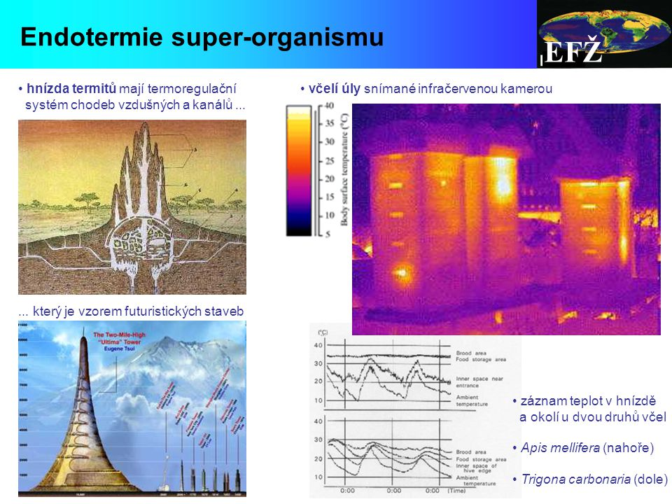 EFŽ včelí úly snímané infračervenou kamerou Endotermie super-organismu hnízda termitů mají termoregulační systém chodeb vzdušných a kanálů......