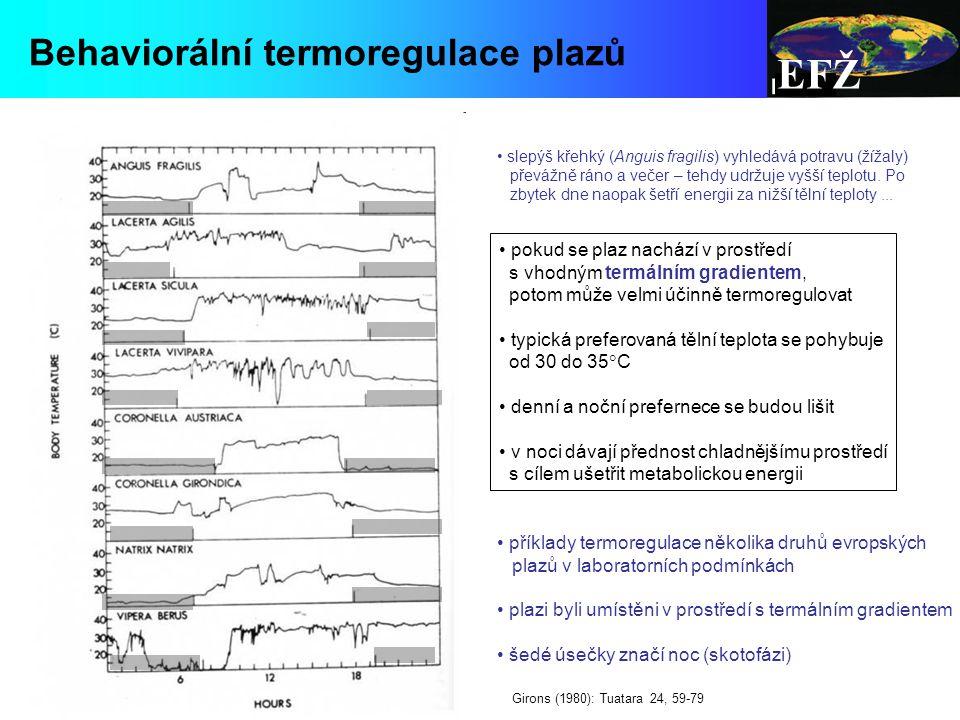 EFŽ Behaviorální termoregulace plazů pokud se plaz nachází v prostředí s vhodným termálním gradientem, potom může velmi účinně termoregulovat typická preferovaná tělní teplota se pohybuje od 30 do 35  C denní a noční prefernece se budou lišit v noci dávají přednost chladnějšímu prostředí s cílem ušetřit metabolickou energii příklady termoregulace několika druhů evropských plazů v laboratorních podmínkách plazi byli umístěni v prostředí s termálním gradientem šedé úsečky značí noc (skotofázi) Girons (1980): Tuatara 24, 59-79 slepýš křehký (Anguis fragilis) vyhledává potravu (žížaly) převážně ráno a večer – tehdy udržuje vyšší teplotu.