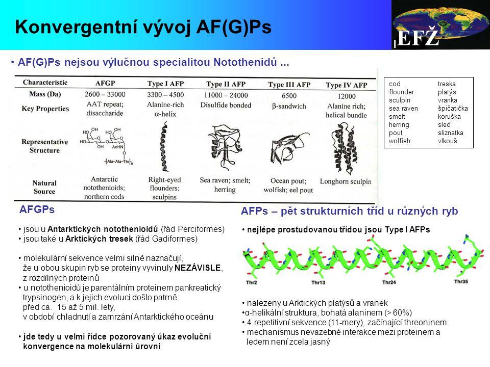 nejlépe prostudovanou třídou jsou Type I AFPs nalezeny u Arktických platýsů a vranek α-helikální struktura, bohatá alaninem (> 60%) 4 repetitivní sekvence (11-mery), začínající threoninem mechanismus nevazebné interakce mezi proteinem a ledem není zcela jasný AFGPs jsou u Antarktických notothenioidů (řád Perciformes) jsou také u Arktických tresek (řád Gadiformes) molekulární sekvence velmi silně naznačují, že u obou skupin ryb se proteiny vyvinuly NEZÁVISLE, z rozdílných proteinů u notothenioidů je parentálním proteinem pankreatický trypsinogen, a k jejich evoluci došlo patrně před ca.