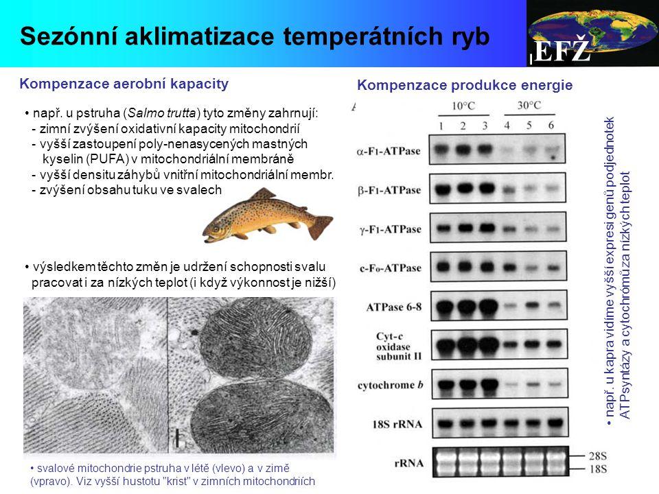 EFŽ Sezónní aklimatizace temperátních ryb např.