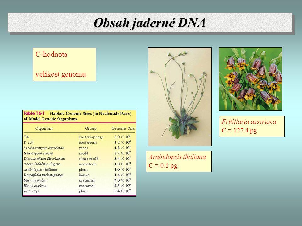 C-hodnota velikost genomu Arabidopsis thaliana C = 0.1 pg Fritillaria assyriaca C = 127.4 pg Obsah jaderné DNA
