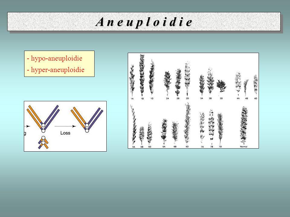 - hypo-aneuploidie - hyper-aneuploidie A n e u p l o i d i e