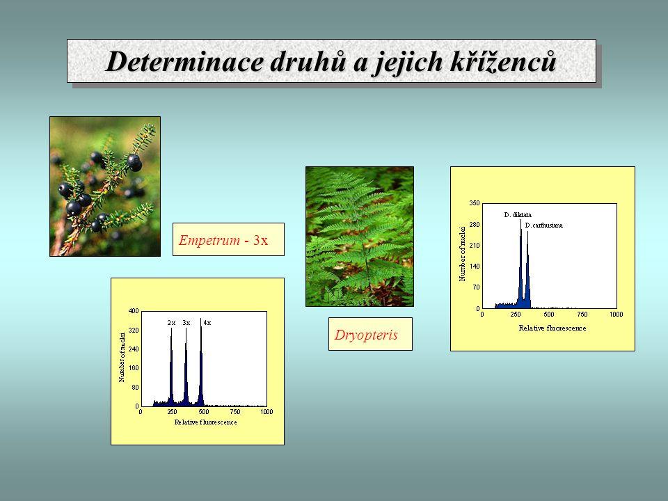 Empetrum - 3x Dryopteris Determinace druhů a jejich kříženců