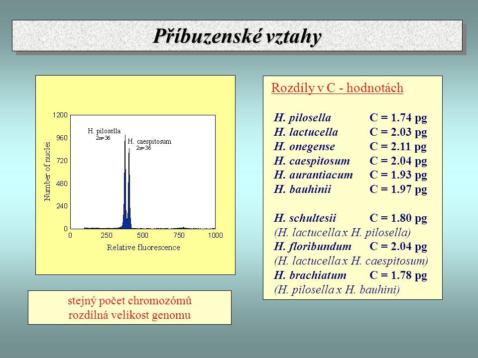 Rozdíly v C - hodnotách H. pilosella C = 1.74 pg H. lactucella C = 2.03 pg H. onegense C = 2.11 pg H. caespitosum C = 2.04 pg H. aurantiacum C = 1.93