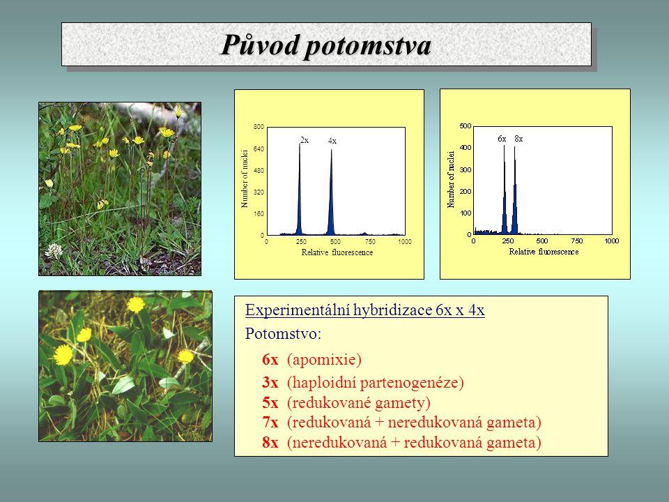 Experimentální hybridizace 6x x 4x Potomstvo: 6x (apomixie) 3x (haploidní partenogenéze) 5x (redukované gamety) 7x (redukovaná + neredukovaná gameta) 8x (neredukovaná + redukovaná gameta) 0 160 320 480 640 800 02505007501000 2x 4x Relative fluorescence Number of nuclei Původ potomstva