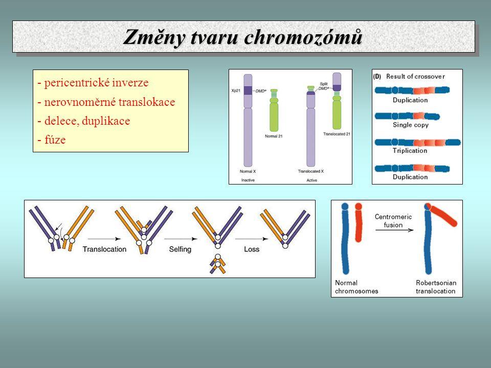 - pericentrické inverze - nerovnoměrné translokace - delece, duplikace - fúze Změny tvaru chromozómů