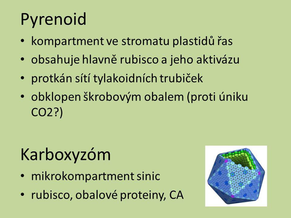 Pyrenoid kompartment ve stromatu plastidů řas obsahuje hlavně rubisco a jeho aktivázu protkán sítí tylakoidních trubiček obklopen škrobovým obalem (pr