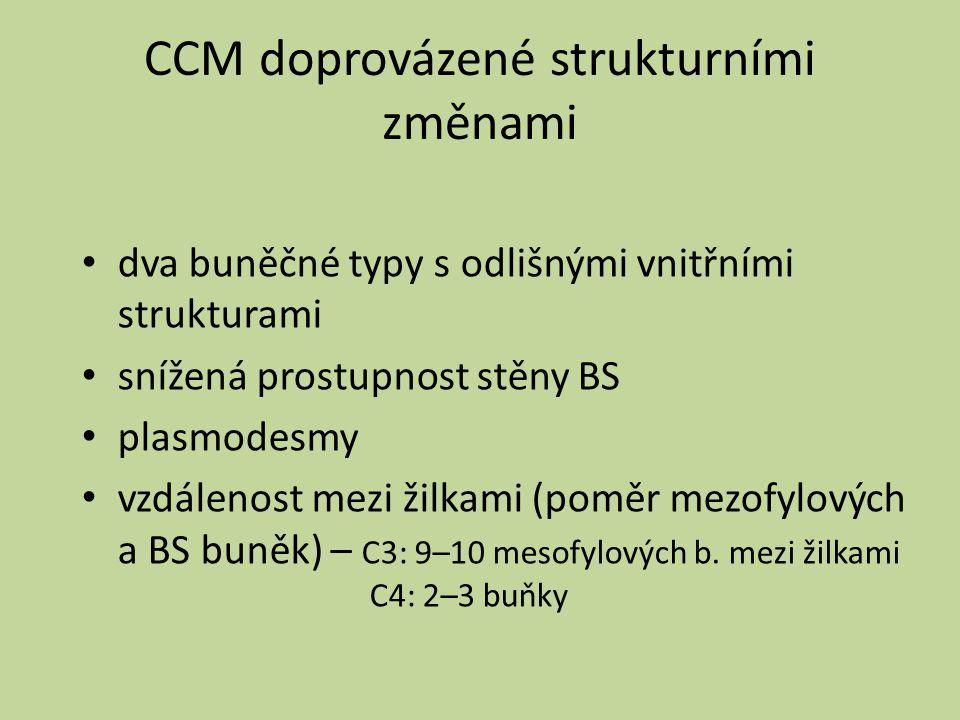 CCM doprovázené strukturními změnami dva buněčné typy s odlišnými vnitřními strukturami snížená prostupnost stěny BS plasmodesmy vzdálenost mezi žilka