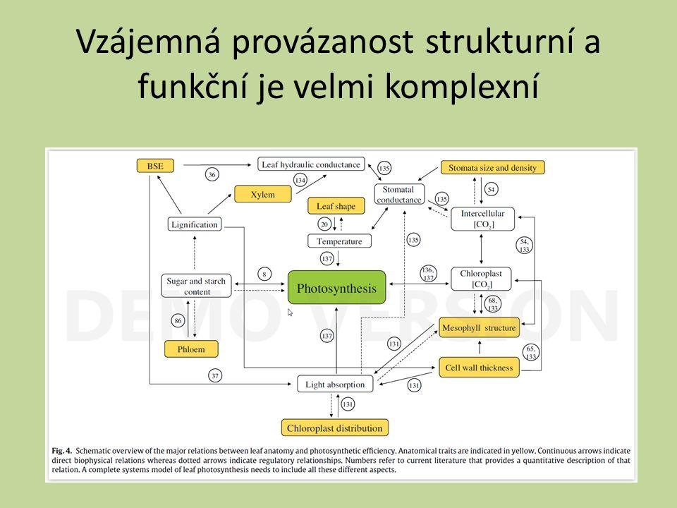 Vzájemná provázanost strukturní a funkční je velmi komplexní