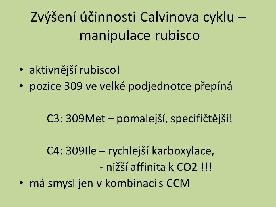 Zvýšení účinnosti Calvinova cyklu – manipulace rubisco aktivnější rubisco! pozice 309 ve velké podjednotce přepíná C3: 309Met – pomalejší, specifičtěj