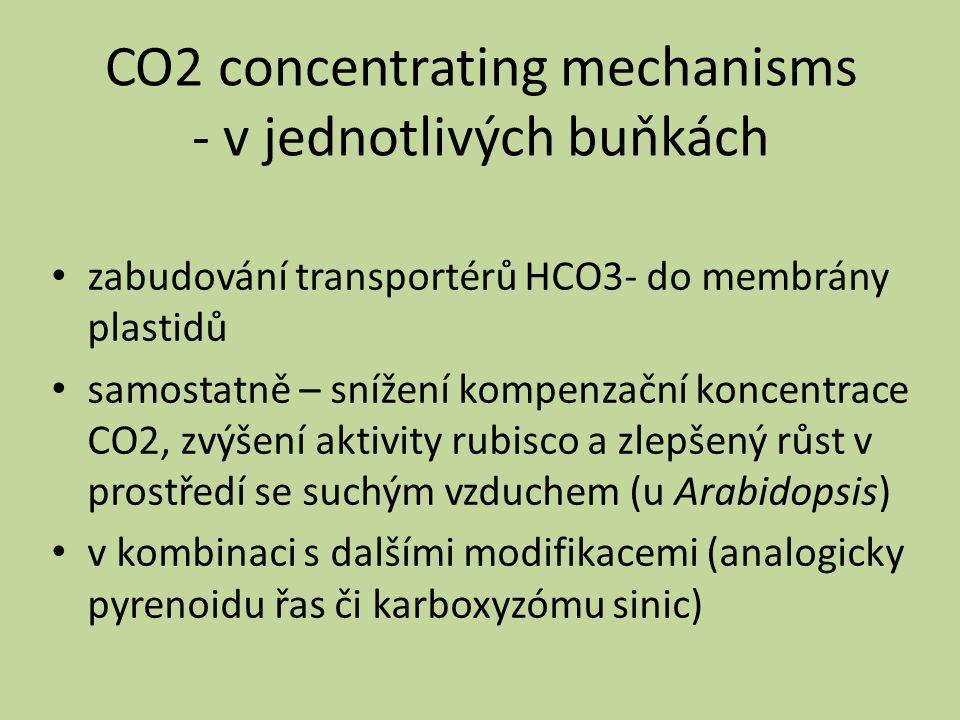 Pyrenoid kompartment ve stromatu plastidů řas obsahuje hlavně rubisco a jeho aktivázu protkán sítí tylakoidních trubiček obklopen škrobovým obalem (proti úniku CO2?) Karboxyzóm mikrokompartment sinic rubisco, obalové proteiny, CA