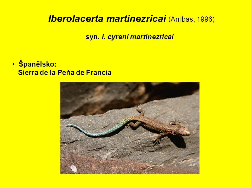 Iberolacerta martinezricai (Arribas, 1996) syn.I.