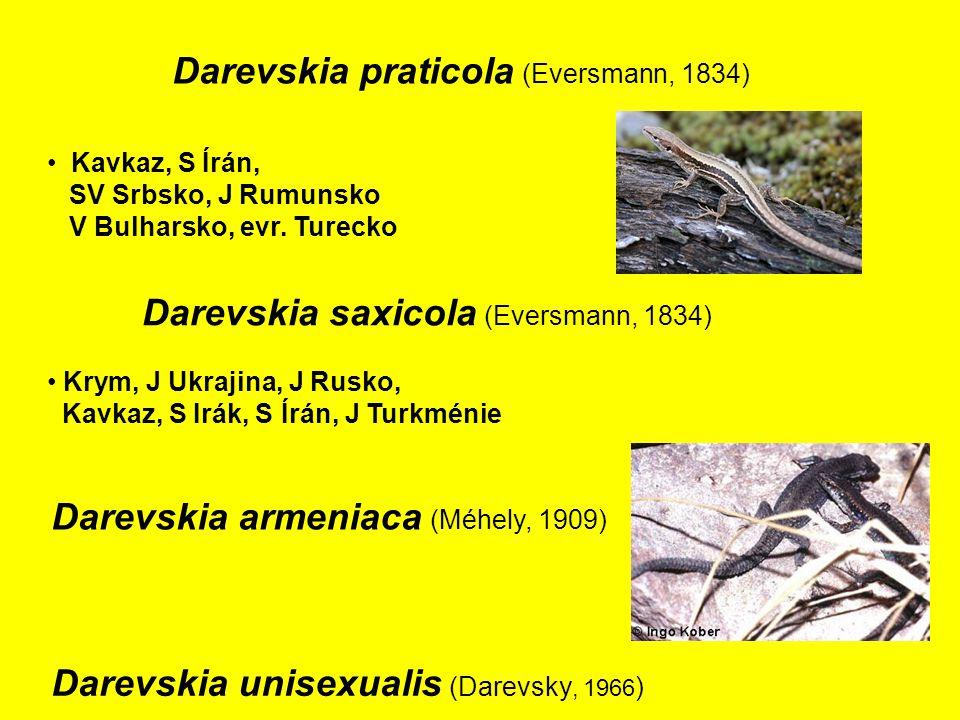 Darevskia praticola (Eversmann, 1834) Kavkaz, S Írán, SV Srbsko, J Rumunsko V Bulharsko, evr.