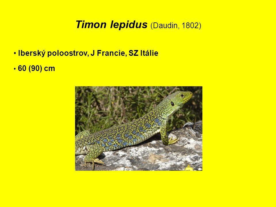 Timon lepidus (Daudin, 1802) Iberský poloostrov, J Francie, SZ Itálie 60 (90) cm