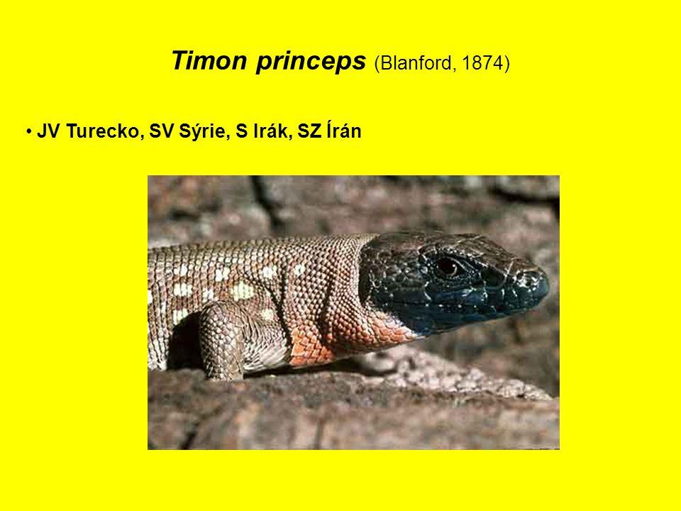 Timon princeps (Blanford, 1874) JV Turecko, SV Sýrie, S Irák, SZ Írán
