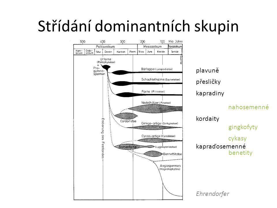 Střídání dominantních skupin Ehrendorfer plavuně přesličky kapradiny kordaity benetity nahosemenné gingkofyty cykasy kapraďosemenné
