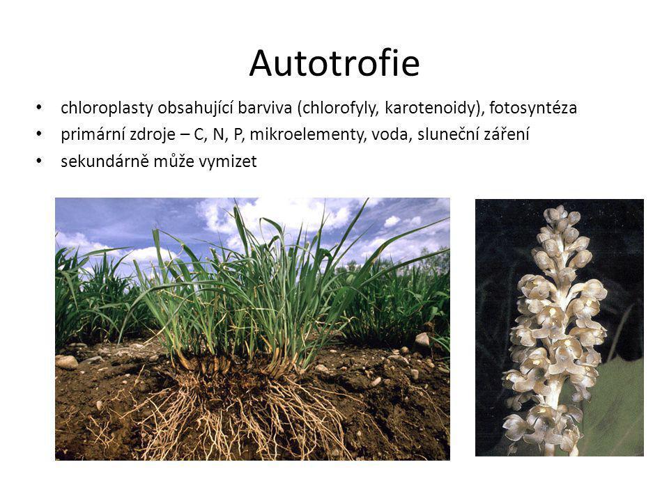 Autotrofie chloroplasty obsahující barviva (chlorofyly, karotenoidy), fotosyntéza primární zdroje – C, N, P, mikroelementy, voda, sluneční záření seku