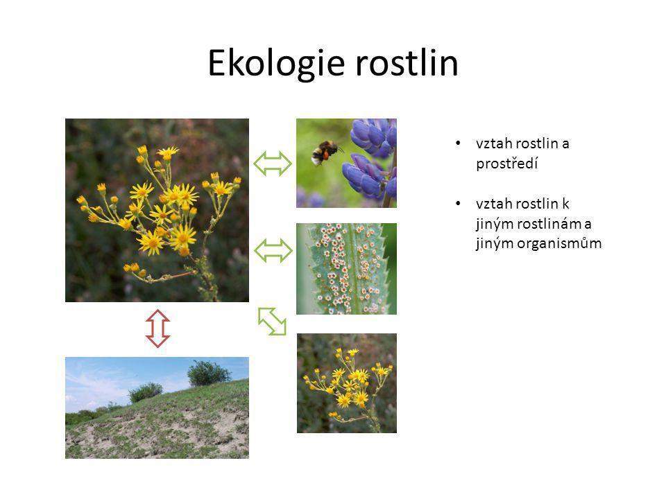 Ekologie rostlin vztah rostlin a prostředí vztah rostlin k jiným rostlinám a jiným organismům