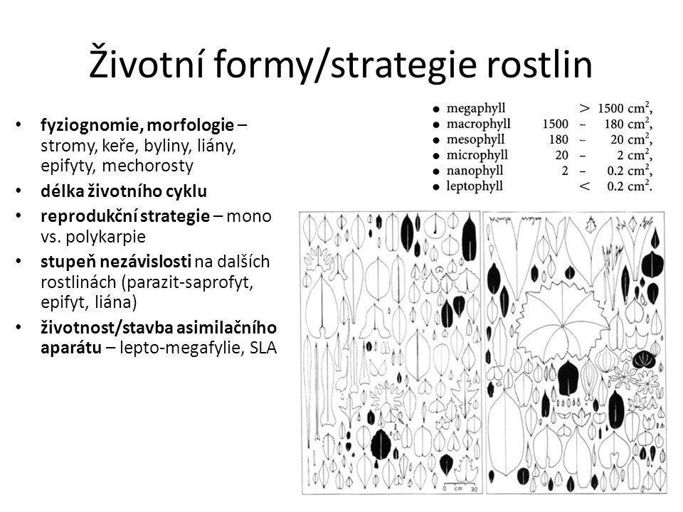 Životní formy/strategie rostlin fyziognomie, morfologie – stromy, keře, byliny, liány, epifyty, mechorosty délka životního cyklu reprodukční strategie