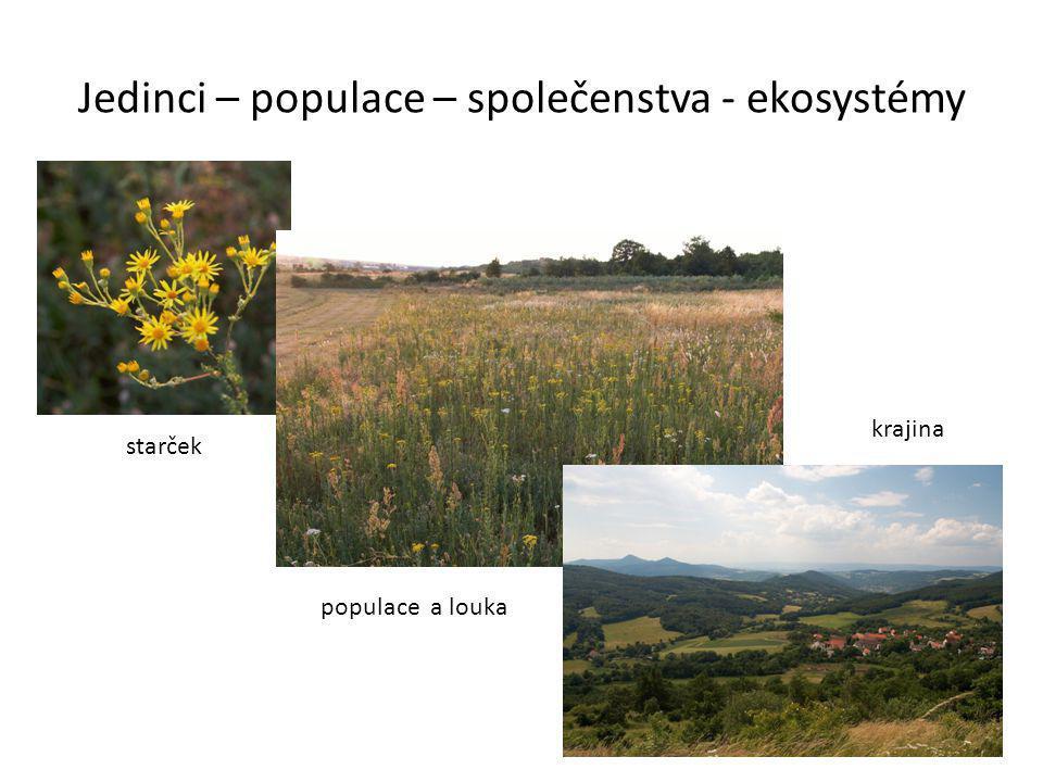 Jedinci – populace – společenstva - ekosystémy starček populace a louka krajina